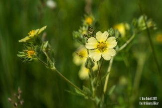 Soft Meadow Yellow