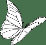butterfly-312188_1280