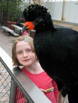 Wattled currasow with Middle Daughter