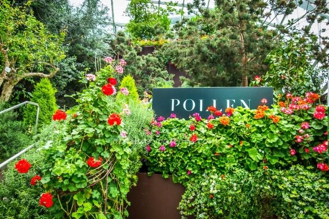 Pollen Terrace