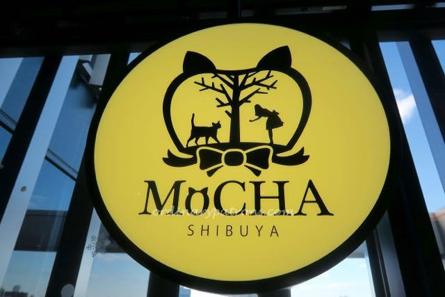 Shibuya Mocha Cat Cafe - 1