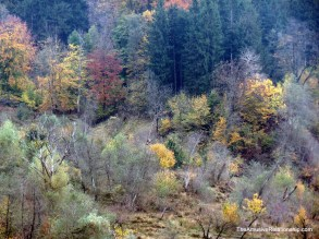 Vermont has nothing on Transylvania's fall colors.