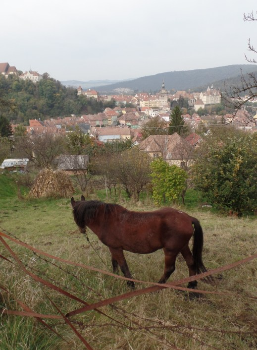 """Horse in Sighisoara. He refused to look at the camera, instead preferring to stare down into the town as if to say, """"yeah, I live here, so suck it, tourists."""""""