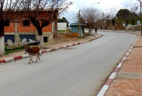 Just another runaway donkey.