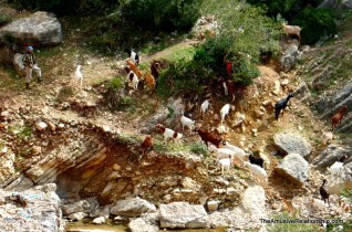 Goats on a cliffside.