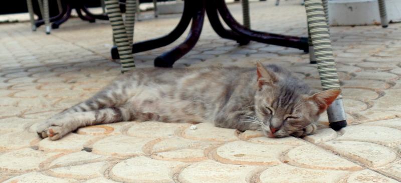 A hotel cat, relaxing.