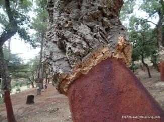 A cork tree