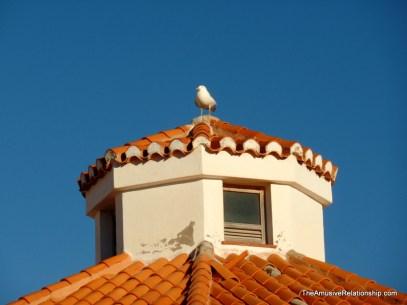 Perching seagull