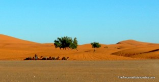 Trees on the fringe of the dunes