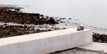 Chillin' by the seashore