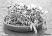 Flowers in Museumplein