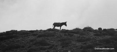 Donkey on a hill overlooking Legzira Beach