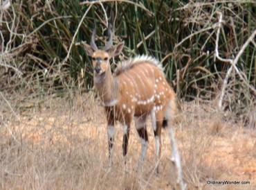 Small entelope