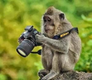 maimuta-si-camera-foto