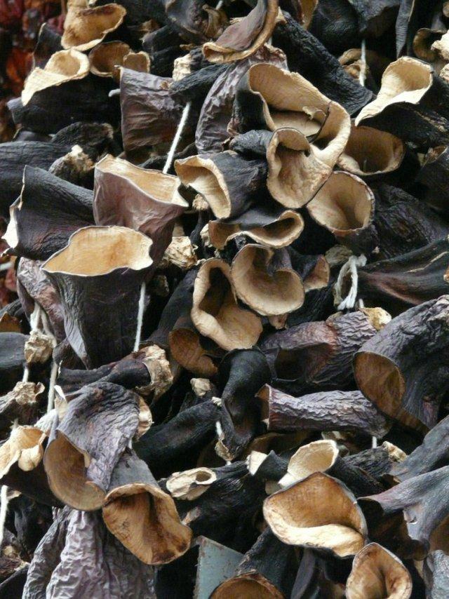 1-ciuperci-urechi-de-lemn-wu-xing