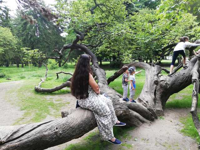 vrem in copac
