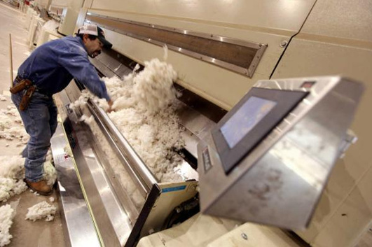 ginning process of cotton