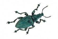 Biologists have explained the origin of iridescent structural coloration of insects
