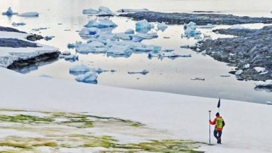 Photo of Climate change makes Antarctica green
