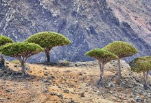 Photo of Biologists have proven that plants help each other in difficult conditions