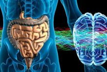 Photo of How intestinal bacteria heal and protect your brain
