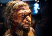Supercomputer simulation revealed a possible reason for the extinction of Neanderthals