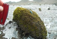 In the Arctic moving balls made of moss