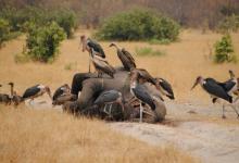Photo of More than a hundred elephants strangely perished in Botswana
