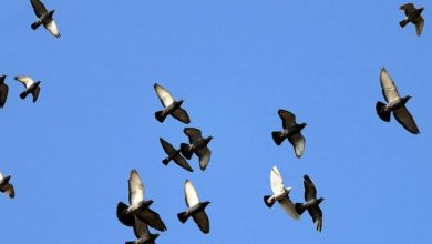 Photo of Engineers create four-winged bird-like drones