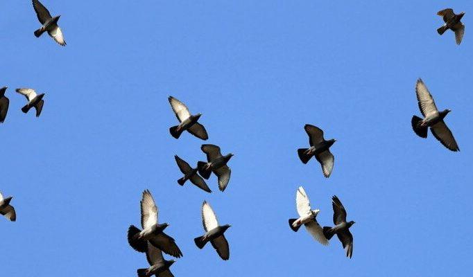 Engineers create four winged bird like drones