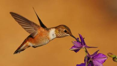 Photo of Hummingbirds were able to understand the concept of numerical order