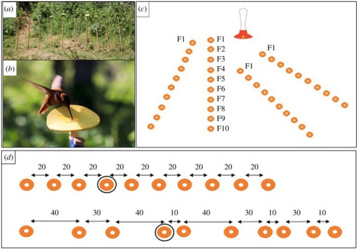Hummingbirds were able to understand the concept of numerical order