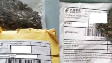 Photo of Mysterious Chinese seeds spawn across US
