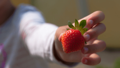 Photo of Popular berry that can cause infertility and cancer