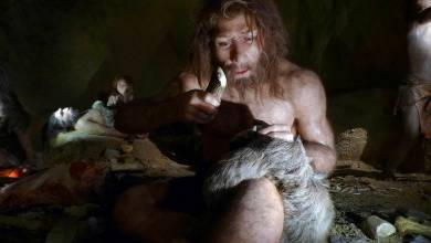 Photo of Neanderthals are very sensitive to pain