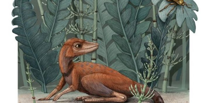 Scientists have discovered a tiny ancestor of dinosaurs 2