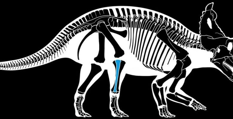 First diagnosed with bone cancer in a dinosaur
