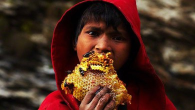 Photo of How the sweet gold of Nepal is mined