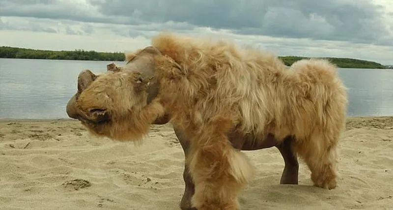 Woolly rhino DNA points to animals extinction