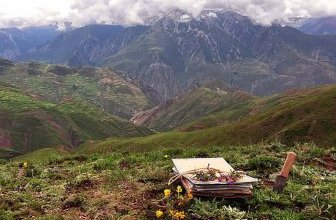 Photo of World's oldest alpine plant area discovered in China