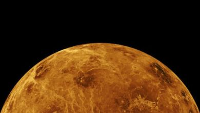 Photo of NASA may have noticed signs of life on Venus 42 years ago
