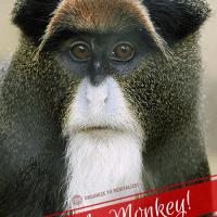 Pas mon cirque Pas mon singe