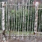 Birch Wood Fence
