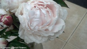 Blush Peony Flowers