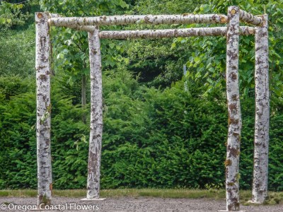 Easy Assembly Birch Wedding Arch