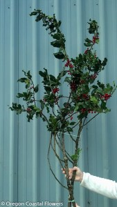 Fresh Holiday Holly Branches with Berries