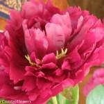 Kansas Peony Flowers