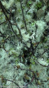 Grandma's Apple Tree Mossy Branches
