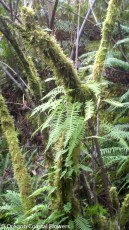 Mossy Branches with Ferns