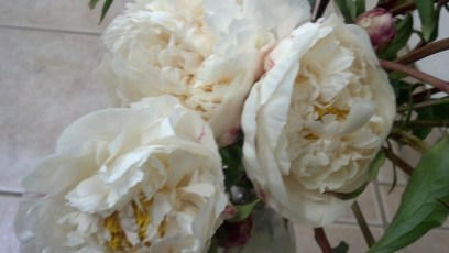 Wedding White Peony Flowers